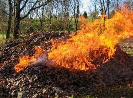 спалювання