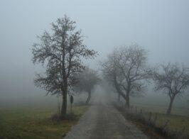 туман 1